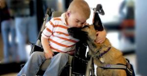 Un esperimento di Pet Therapy