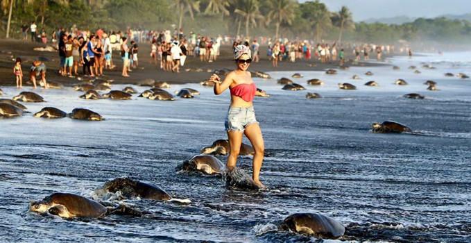 tartarughe sulla spiaggia in Costa Rica