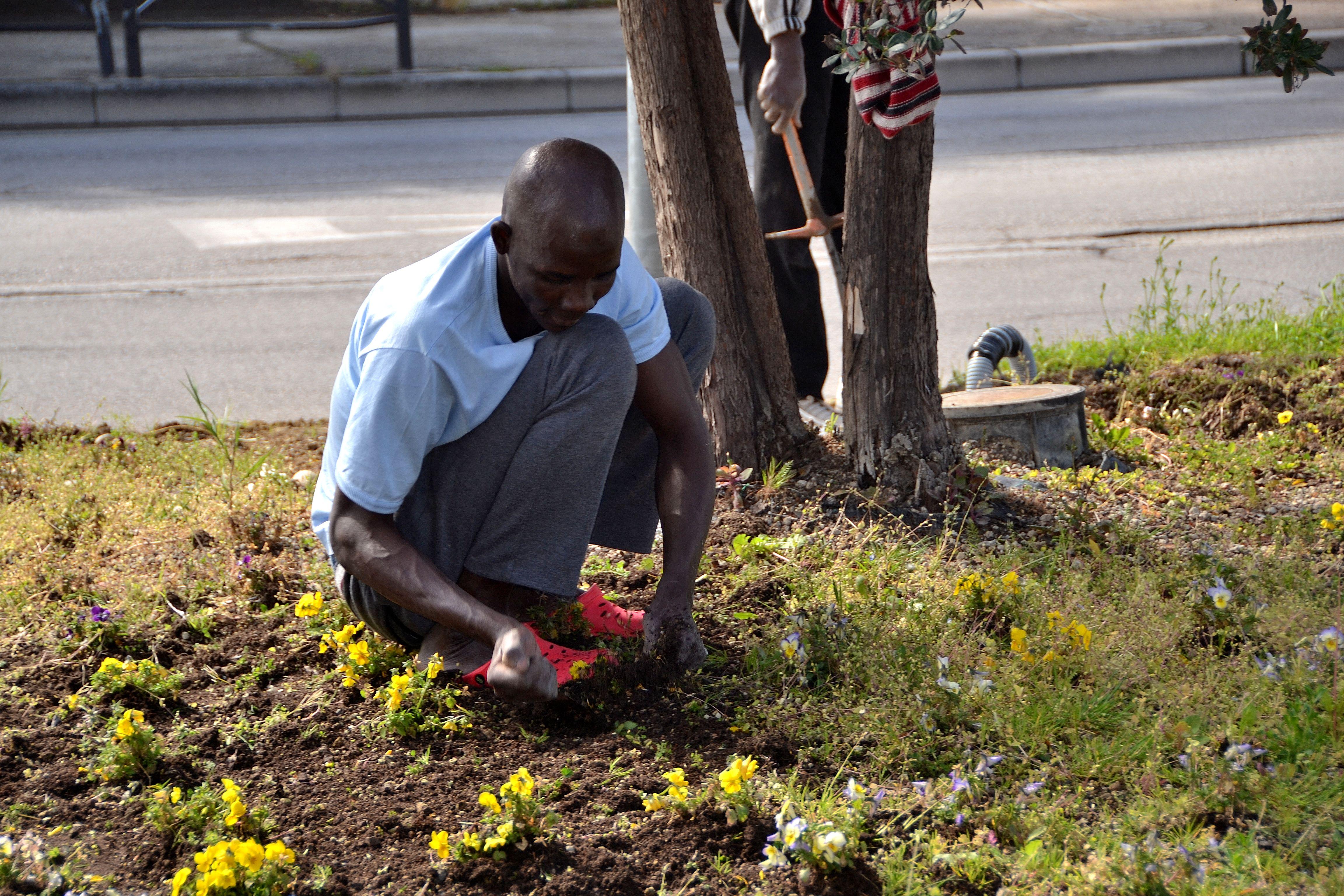 profughi giardinieri