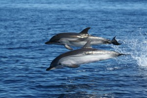 Santuario per i mammiferi marini