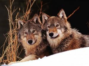Adozioni di specie a rischio d'estinzione