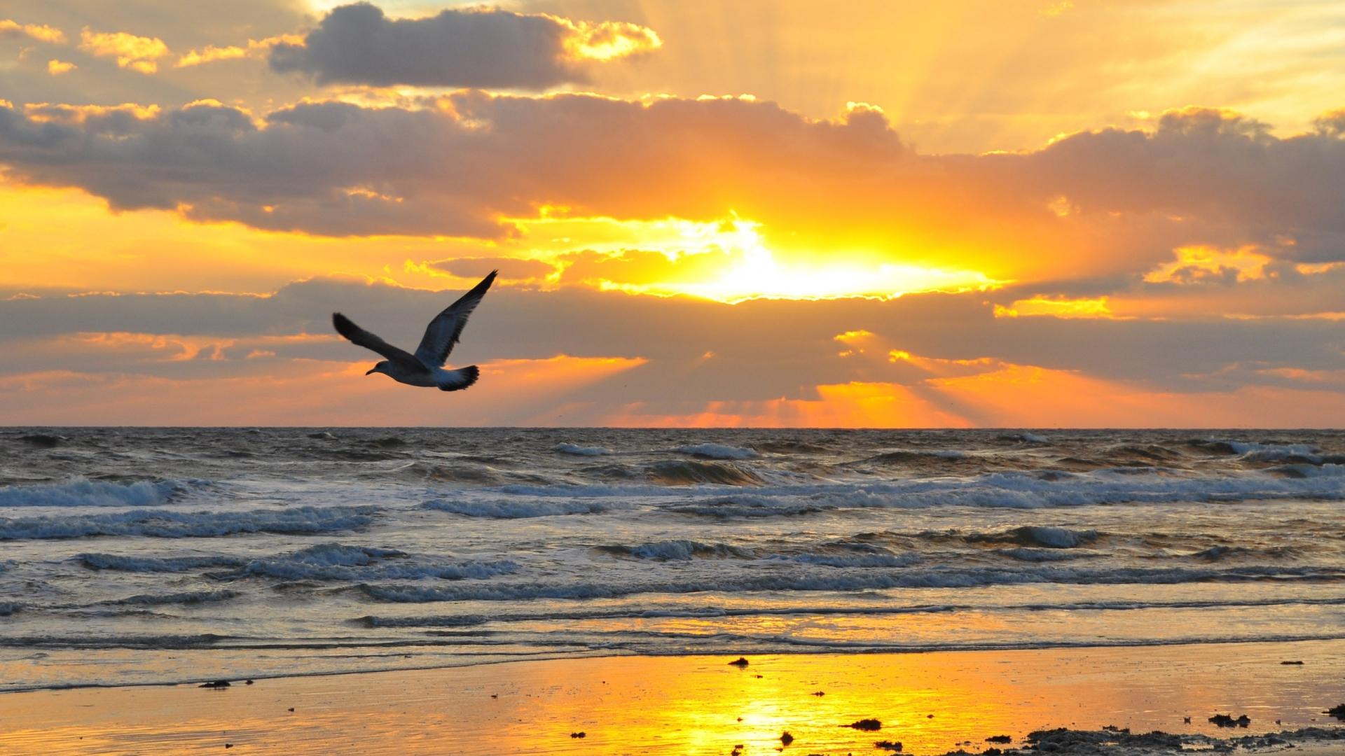 uccello tramonto
