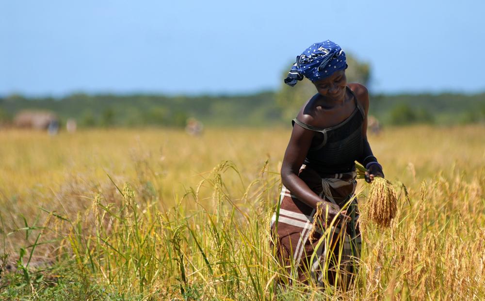 Pemba verde Mozambico