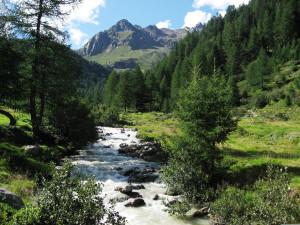 nove associazioni ambientaliste