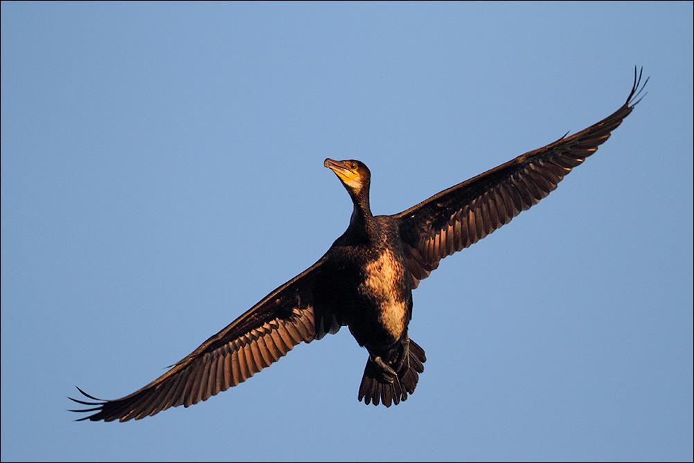 fauna selvatica europea a rischio