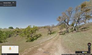 foresta di querce nella California Centrale