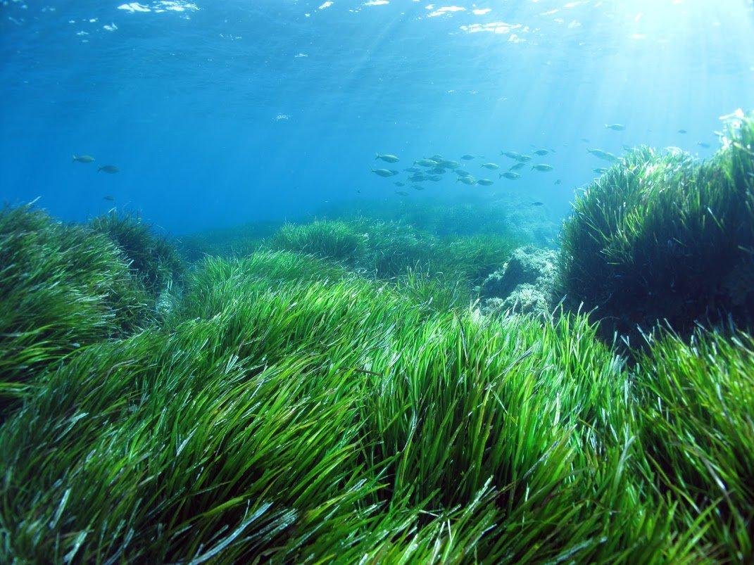 vernici ecosostenibili dalle alghe