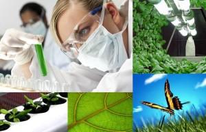 biotecnologie sostenibili