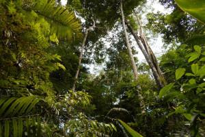 iniziativa DifendiAMO la Natura
