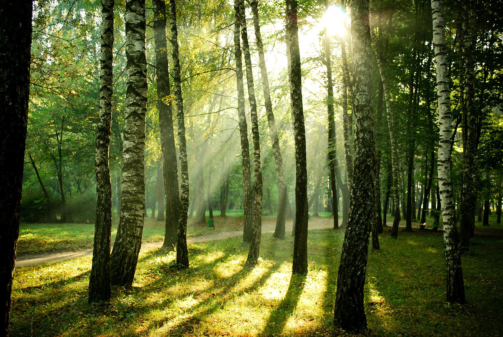 una fotografia sulle foreste in europa felicit pubblica