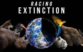 Racing Extinction, il documentario denuncia