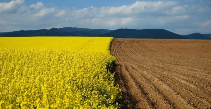 agricoltura-globale