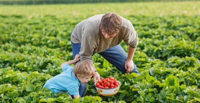 Residui di pesticidi negli alimenti