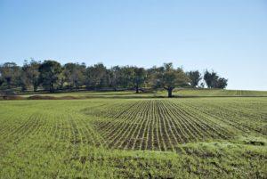 L'allarme di Coldiretti: in Italia -28% di terra coltivata per colpa di un modello di sviluppo errato