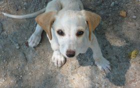 L'allarme dell'AIDAA: nel 2016 oltre 23.500 cani sono stati avvelenati