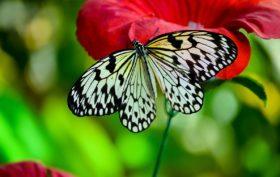 L'allarme di Greenpeace: insetticidi dannosi anche per farfalle, bombi e uccelli