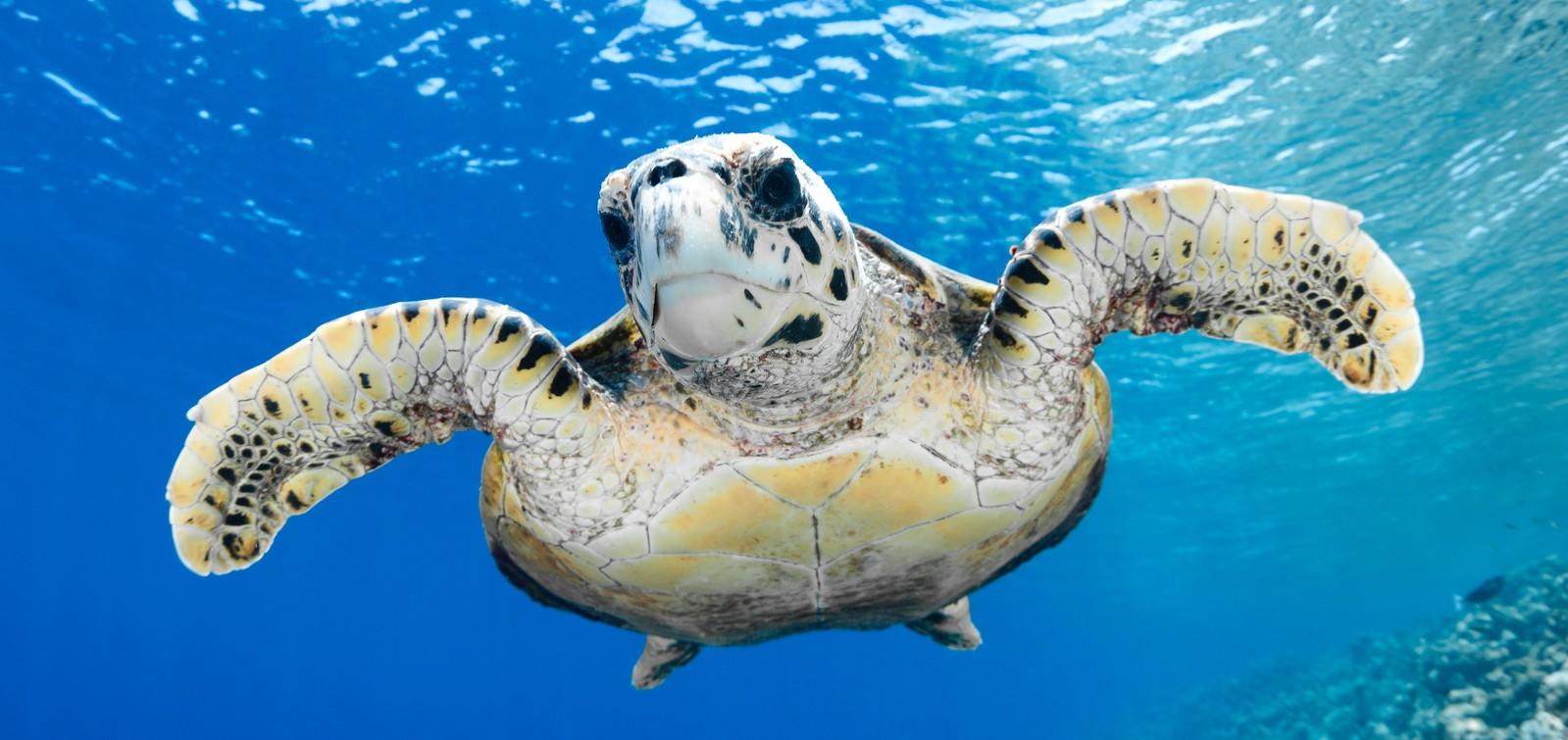 Domani inaugura a portici il centro ricerche tartarughe marine for Vasche per tartarughe marine