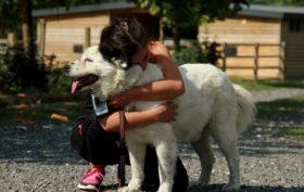 Impronte di Gioia: la campagna per aiutare i cani randagi della Romania