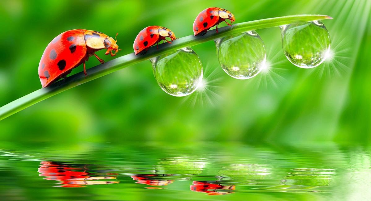 Giornata della natura