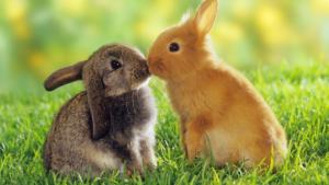 la rivincita dei conigli