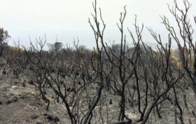 Pantelleria bruciata
