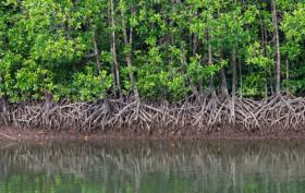 Mangrovie ecosistema