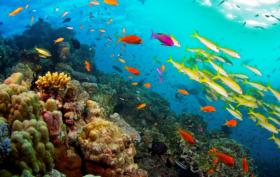 valore economico grande barriera corallina