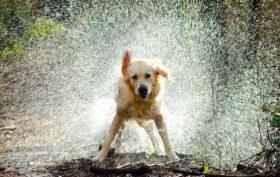 cane caldo