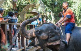 turismo-responsabile-elefanti
