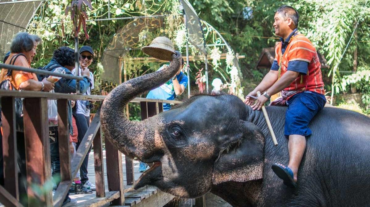 La parata degli elefanti rosa parte curiosità disney