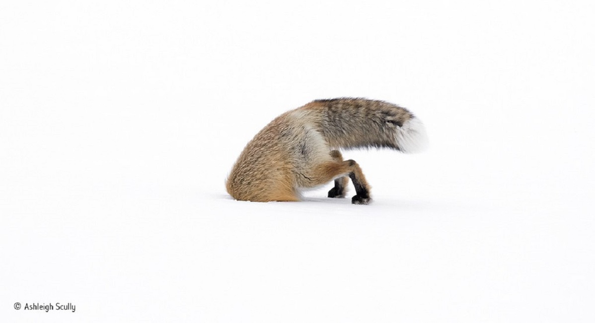 Ashleigh Scully - Wildlife Photographer of the Year