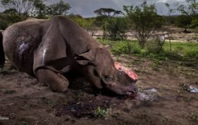 Brent Stirton - Wildlife Photographer of the Year
