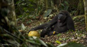Daniel Nelson - Wildlife Photographer of the Year