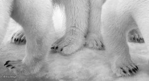 Eilo Elvinger - Wildlife Photographer of the Year