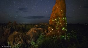 Marcio Cabral - Wildlife Photographer of the Year