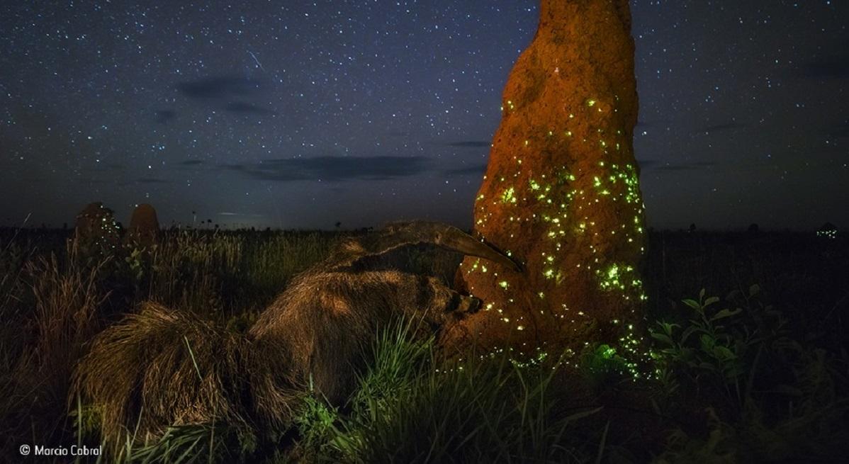Marcio Cabral – Wildlife Photographer of the Year
