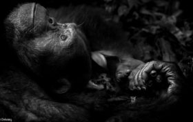 Peter Delaney - Wildlife Photographer of the Year