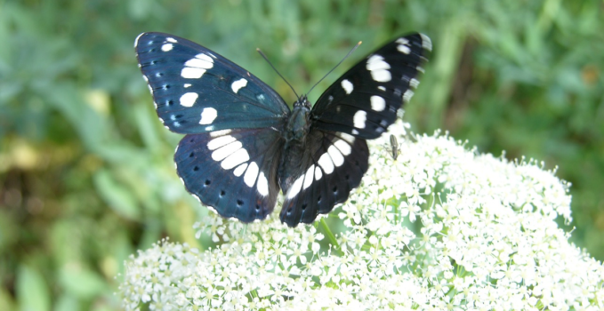 insetti volanti