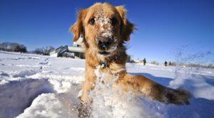 animali neve