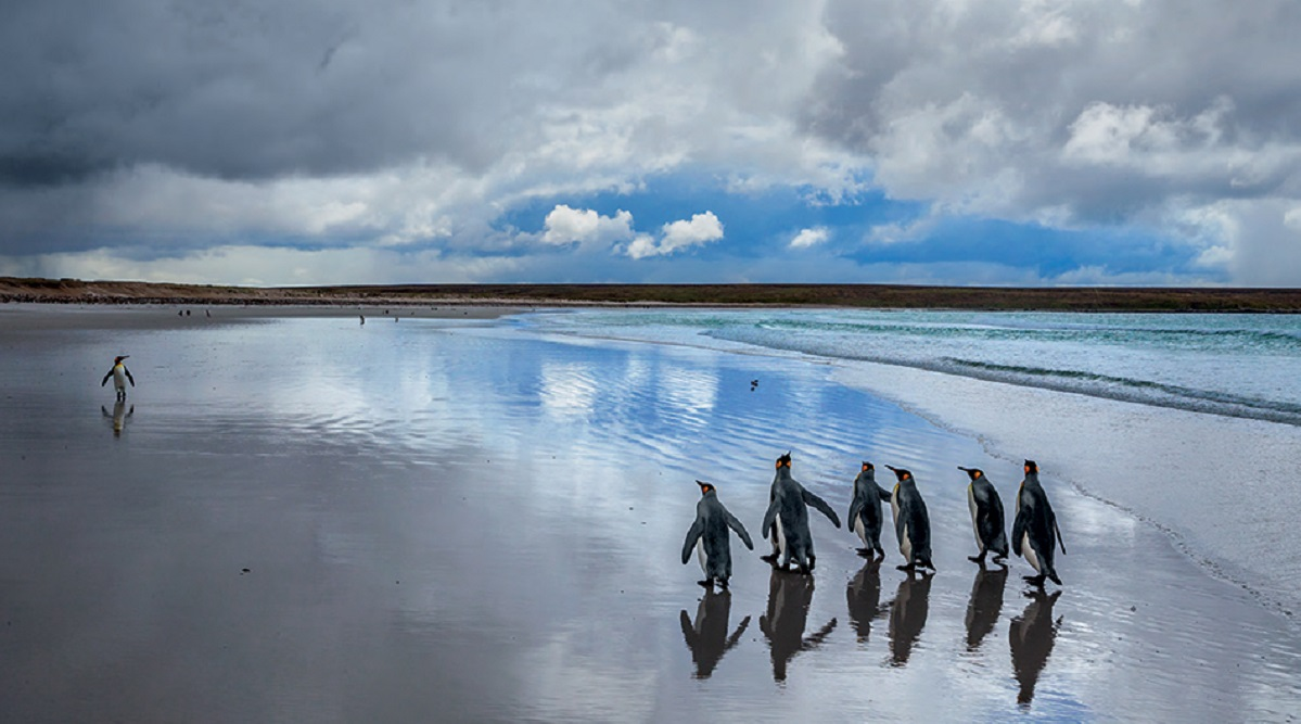 paul nicklen 2