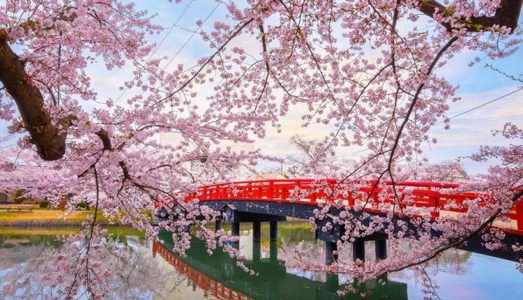 fioritura-ciliegi-2019-previsioni-giappone